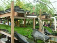 Growing power aquaponics